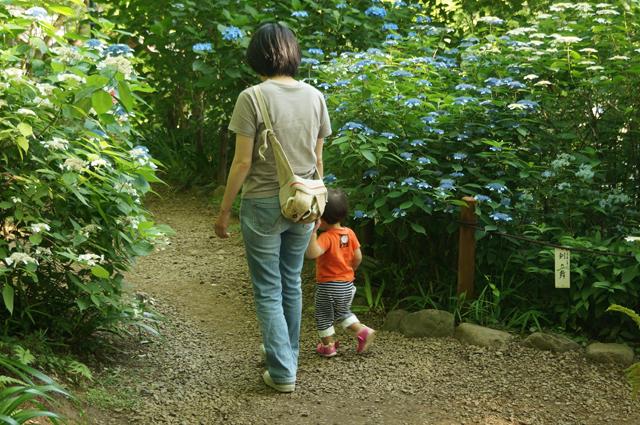 アジサイ山を行く母と娘