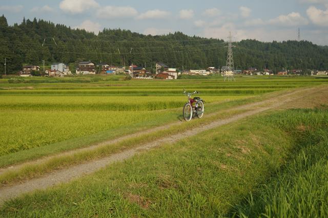 フキプランニングFK310 LAⅢ 、コシヒカリの田んぼにて