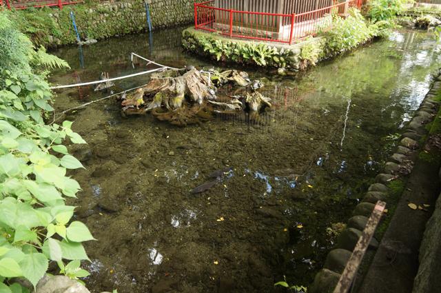 谷保天満宮にある湧水の弁天池