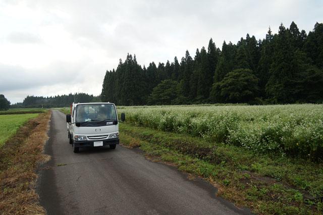 マツダタイタン、伊達原秘密飛行基地跡の今は蕎麦の花が咲く農道にて