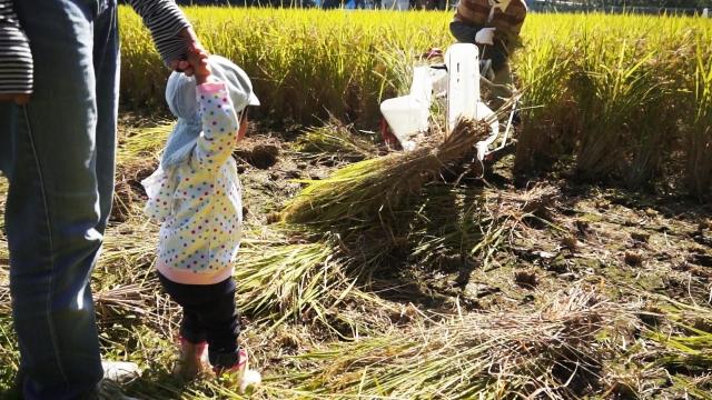 稲刈機と子供