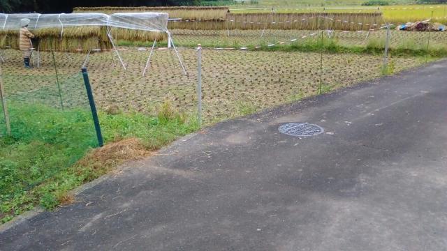 雨が降り始めた稲刈中の田んぼ