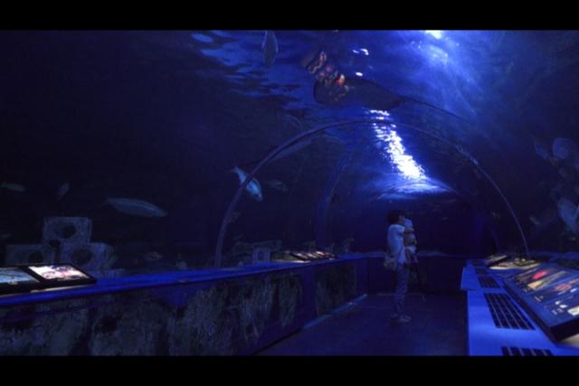 しながわ水族館 魚のトンネル
