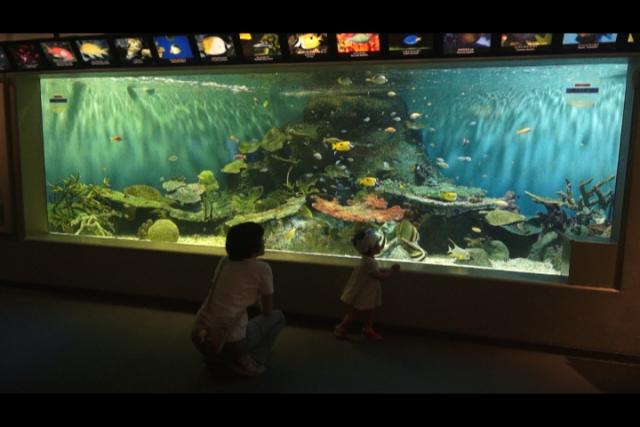 しながわ水族館 熱帯魚
