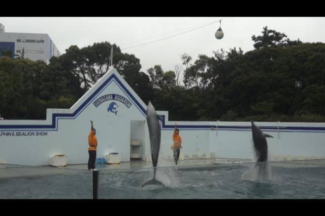 しながわ水族館 イルカのショー