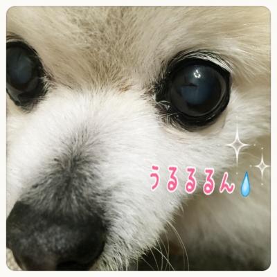 20160805091803c6b.jpeg