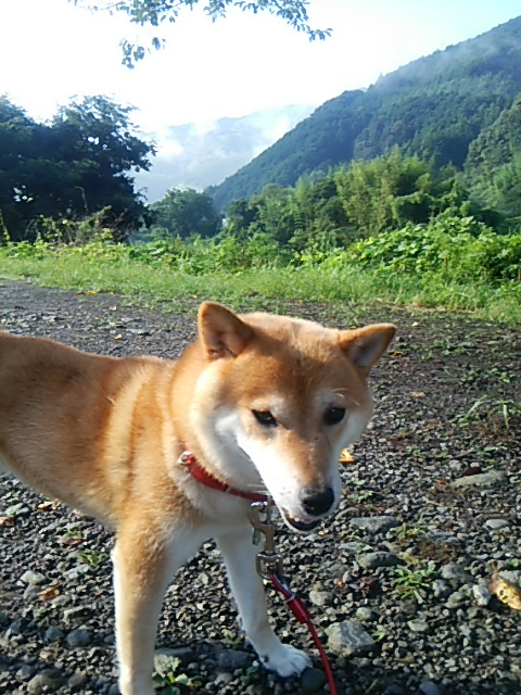 富士子おさんぽ160816