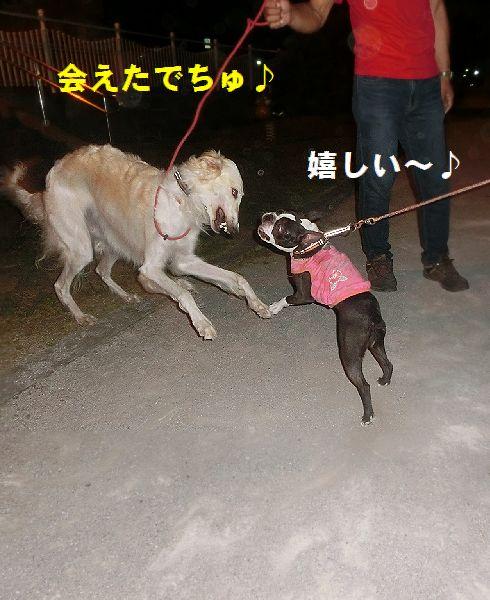 a_2016081310403661c.jpg