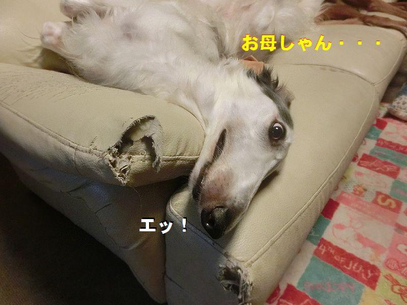 b_201607210234214a7.jpg