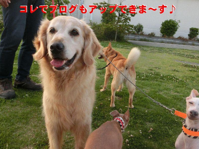 d_20160519231955a23.jpg