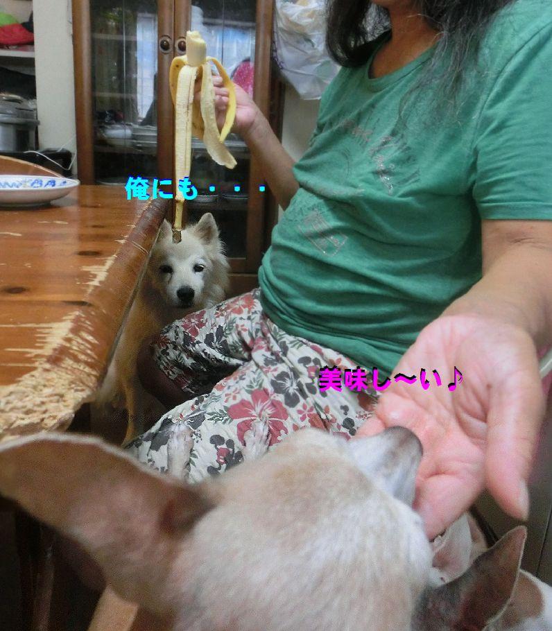 e_2016082010372010c.jpg