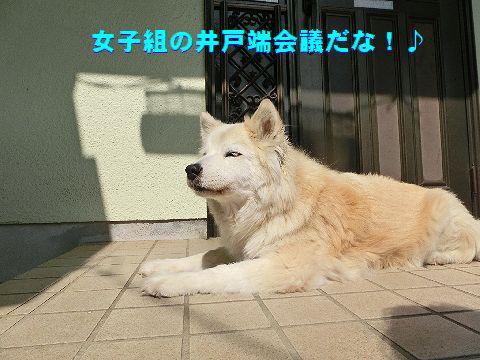 g_20160413030548b97.jpg