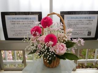 0312furawa-tranann16.jpg