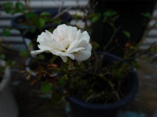 0523barahowaito1.jpg