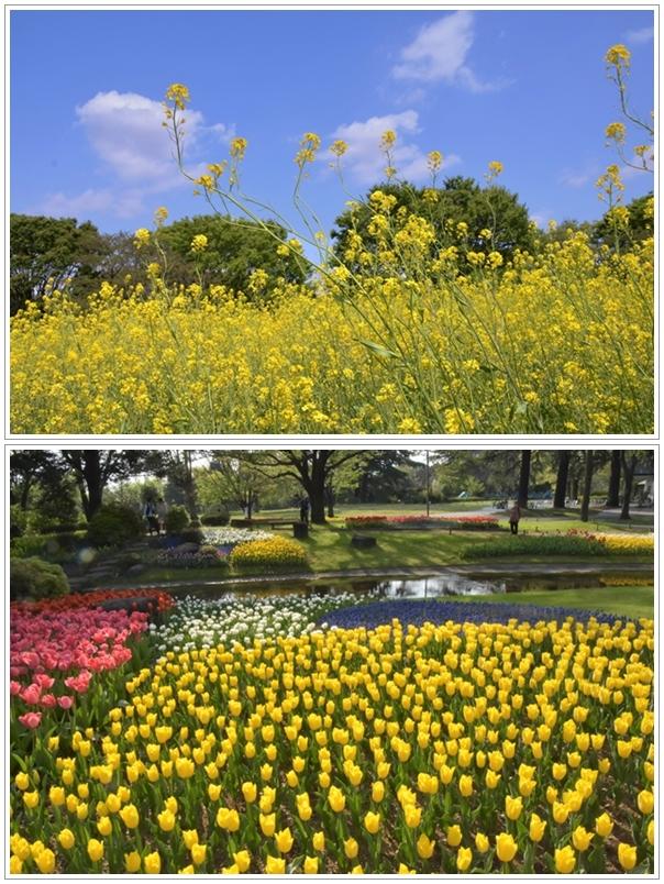 22昭和記念公園
