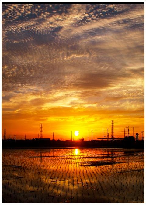 480P5257704A3田植え終了夕陽輝く