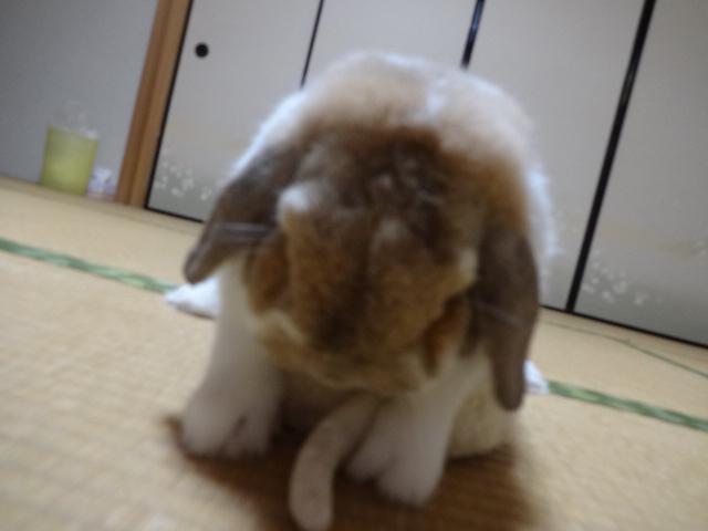 H28うーしゃん誕生日 (8)
