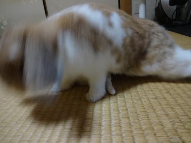 H28うーしゃん誕生日 (9)