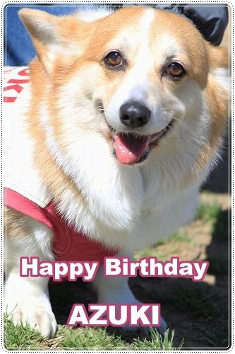 Happy Birthday AZUKI
