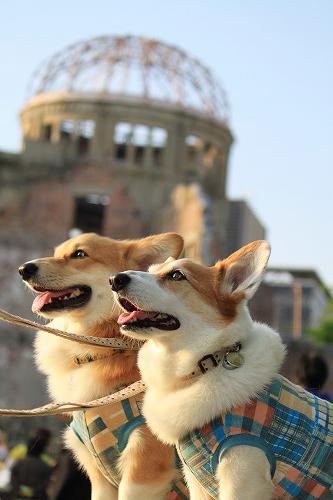 原爆ドームと坊ちゃん'S