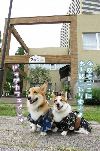 Ys Dogcafe
