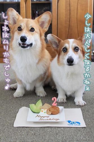 6月れんたん誕生日