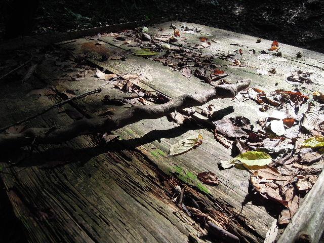 落ち葉と枯れ枝