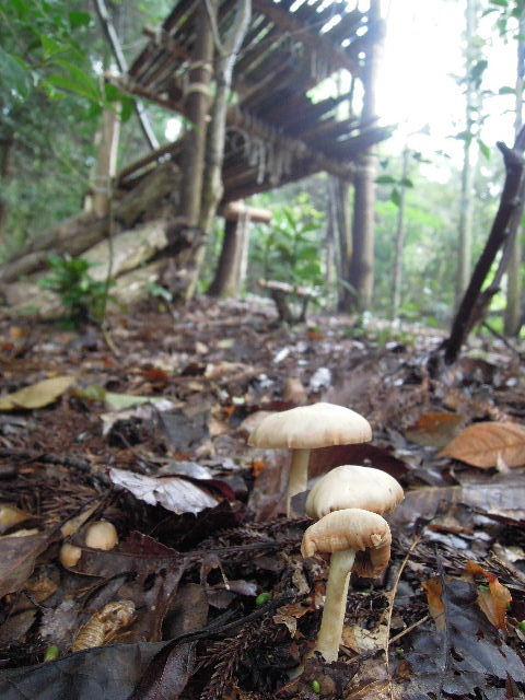 雨後の雑木林クラブ