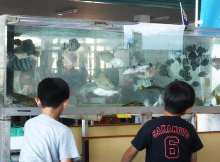 田子の浦漁協食堂:店内2