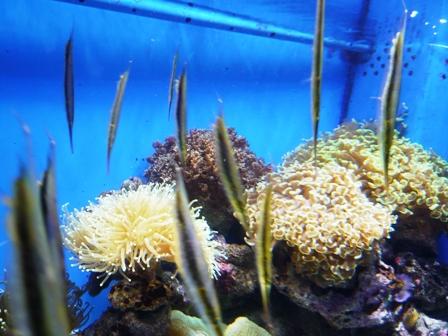 沼津港深海水族館:魚?