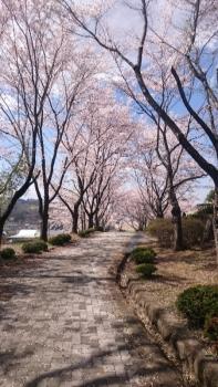 20160419花見稲荷山