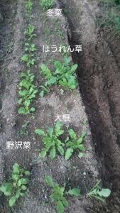 20160927秋野菜