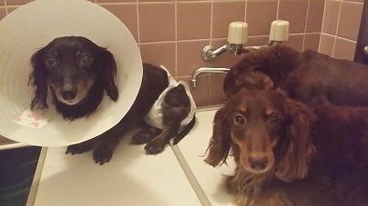 お風呂でも一緒2