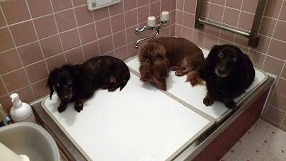 お風呂場も一緒