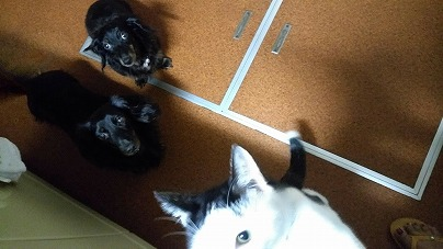 スマホをイジる猫