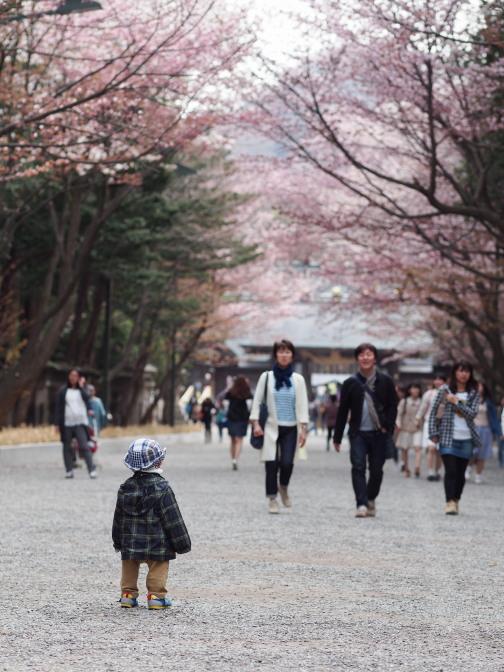 …桜は初体験?