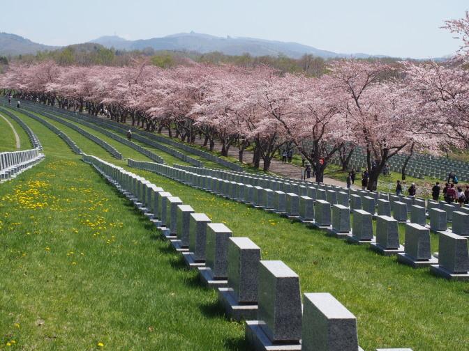 戸田記念墓地公園の桜(桜冠の道)