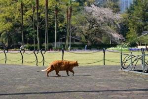 April Cats Tokyo