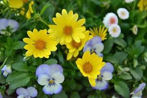 April Flowers Tokyo