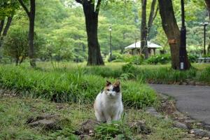 May Cat Tokyo