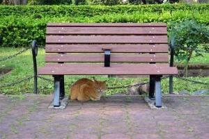 May Cats Tokyo