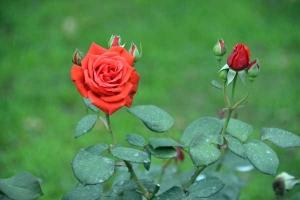June Rose