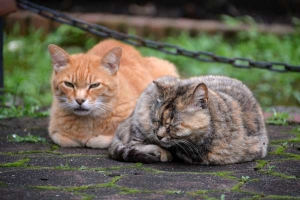 June Cats Tokyo
