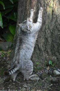 June Cat Tokyo