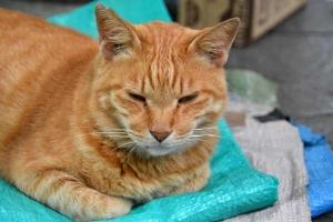 日比谷公園の猫チャッピー