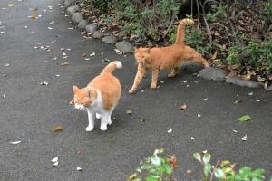 July Cats Tokyo