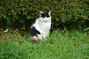 July Cat Tokyo