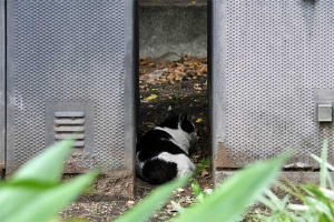 August Cat Tokyo