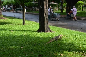 Monitor Lizard and Cat(s) of Bangkok Thailand