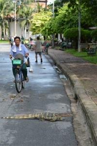 Monitor Lizard Bangkok Thailand